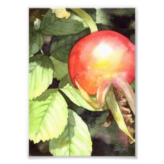 Cadera color de rosa - impresión floral del arte fotografias