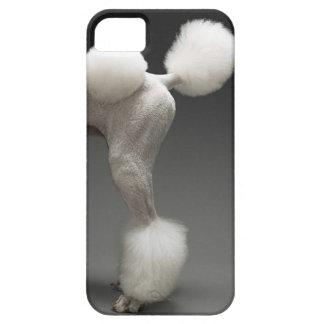 Caderas del caniche, en fondo gris iPhone 5 cobertura