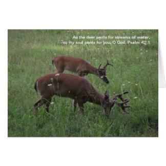 Cades Cove deer scripture note card