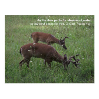 Cades Cove deer Smoky Mountains Scripture postcard