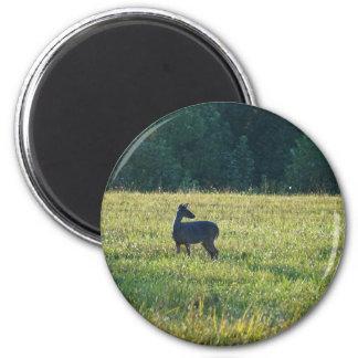 Cades Deer 2 Inch Round Magnet