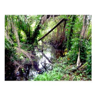 Caer los árboles Green River deposita Posterized Postal