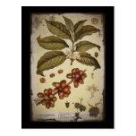 Café botánico retro de la imagen tarjeta postal