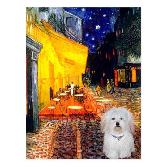 Cafe - Coton de Tulear 4b Postcard