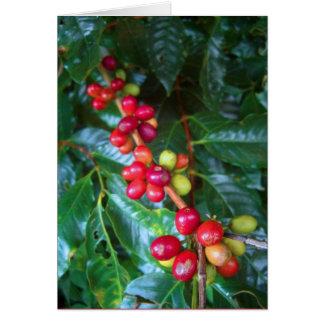 Café hawaiano salvaje tarjeton