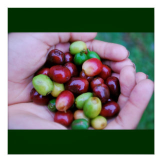 Cafe Series - Coffee Cherries Poster