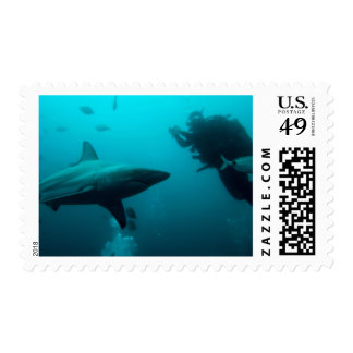 Cage Diving With Blacktip Sharks Postage Stamp