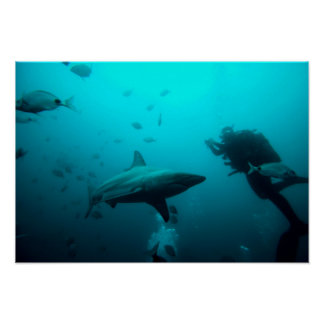 Cage Diving With Blacktip Sharks Poster