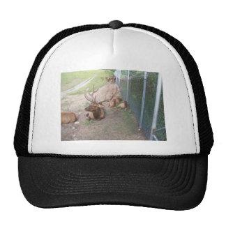 caged deer elk reindeer trucker hat