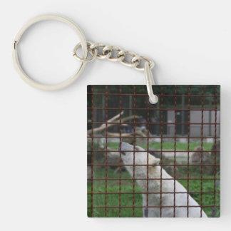Caged polar bear keychain