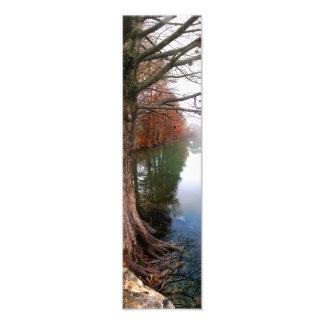 Caída 2 del rastro de Lake Butler de la mariquita Arte Fotografico
