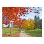 Caída de las hojas de otoño postal