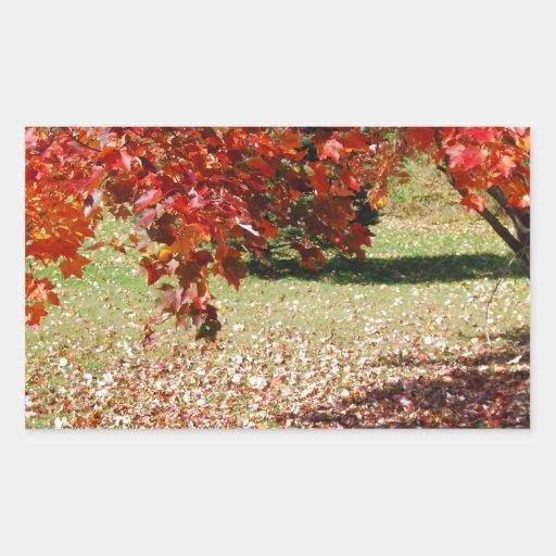 Caída debajo del árbol de arce rectangular pegatina
