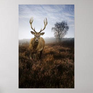 Caída del otoño con el macho hermoso del ciervo co impresiones