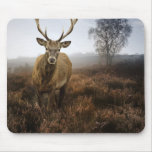 Caída del otoño con el macho hermoso del ciervo co mouse pads