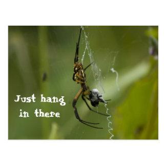 Caída del Web de araña del plátano apenas adentro Postales