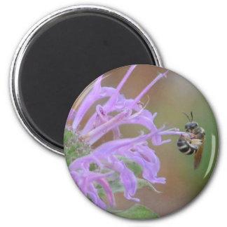 Caída en allí/beebalm de la bergamota salvaje imán para frigorífico