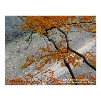 Caída en colores del amor/del otoño postales
