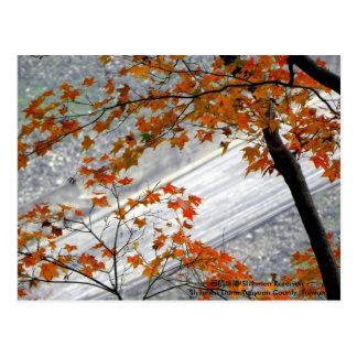 Caída en colores del amor/del otoño tarjetas postales
