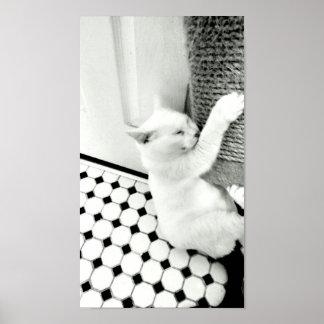 Caída en poster allí blanco y negro del gato