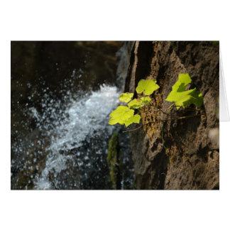 Caídas del agua tarjeta de felicitación
