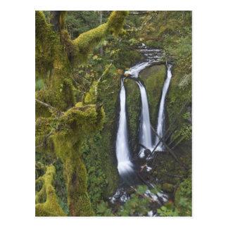 Caídas del triple, garganta 2 del río Columbia Tarjeta Postal