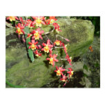 Caídas florales tarjeta postal