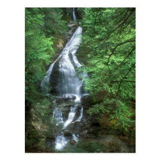 Caídas Stowe Vermont de la cañada del musgo Postales