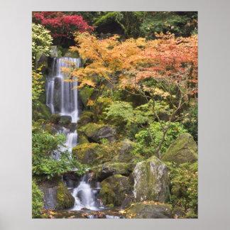 Caídas y colores divinos del otoño póster