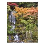 Caídas y colores divinos del otoño tarjeta postal