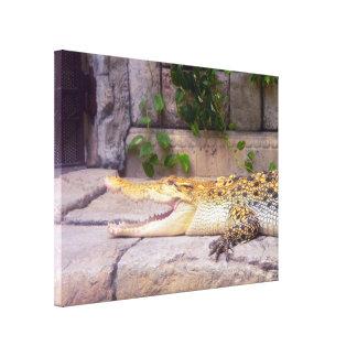 Caiman Crocodile Stretched Canvas Print