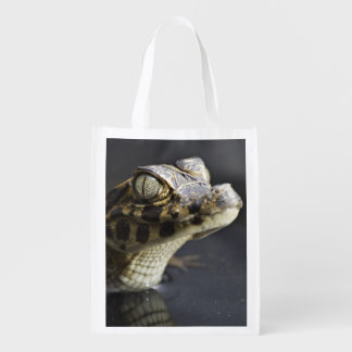 Caimán joven en agua con la reflexión bolsas de la compra