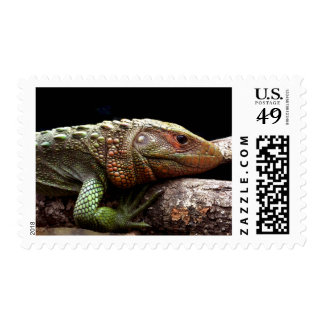 Caiman Lizard – Olympic Swimmer and Climber Postage
