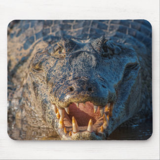 Caiman shows its teeth, Brazil Mouse Pad