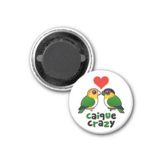 Caique Crazy 1 Inch Round Magnet