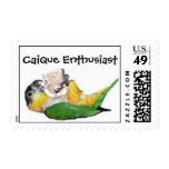 Caique Enthusiast Postage Stamps