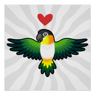 Caique/Lovebird/Pionus/amor del loro Posters