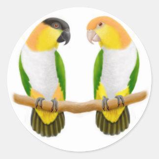 Caique Parrot Love Sticker