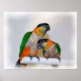 Caique Parrot Pair Watercolor Photo Painting Posters