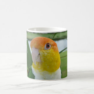 Caique Parrot White 11 oz Classic White Mug