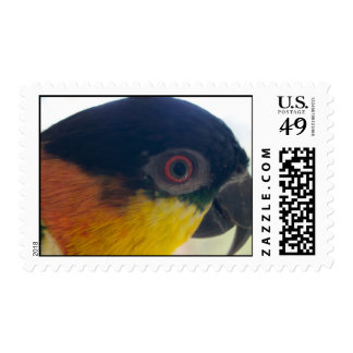 Caique Stamp