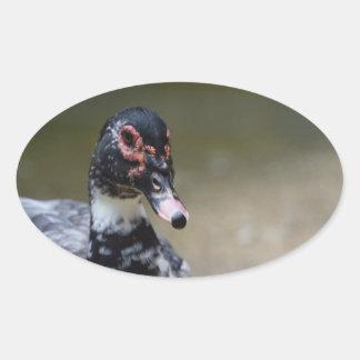 Cairina moschata domestica oval sticker