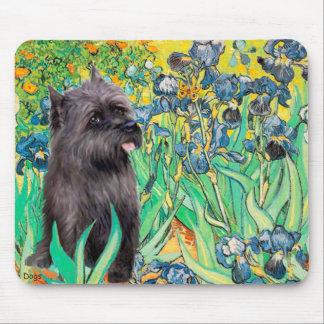 Cairn (Brindle 17) - Irises Mouse Pad