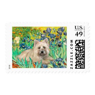 Cairn Terrier 4 - Irises Postage
