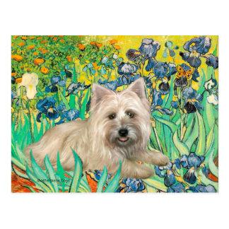 Cairn Terrier 4 - Irises Postcard
