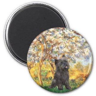 Cairn Terrier (Brindle 21) - Spring Magnet