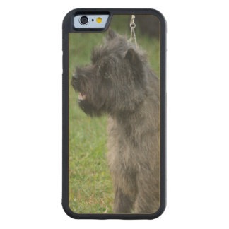 Cairn Terrier Carved® Maple iPhone 6 Bumper