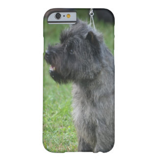 Cairn Terrier Barely There iPhone 6 Case