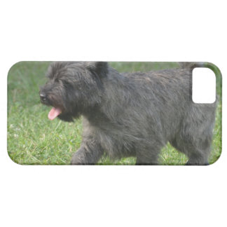 Cairn Terrier iPhone 5 Cover