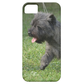 Cairn Terrier iPhone 5 Covers